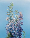 Common Flower Name Delphinium Pacific Giant